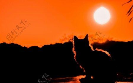 落日下的猫咪图片