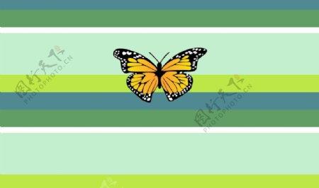 花蝴蝶条纹图片