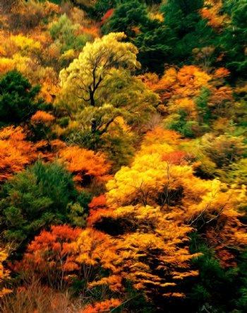 枫树林风景油画图片