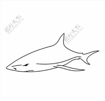 线条鲨鱼矢量图图片