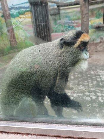 动物园猴子图片