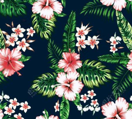 热带植物花图片