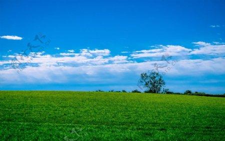 蓝天白云绿色草地图片