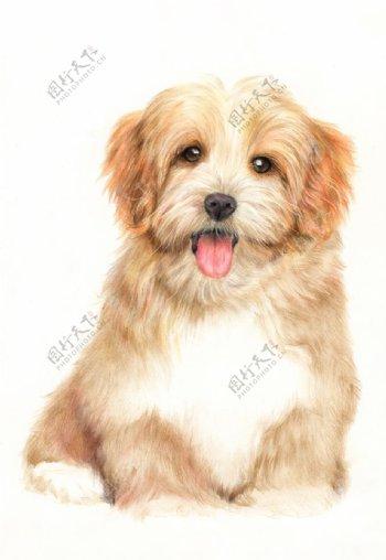 彩铅小狗图片