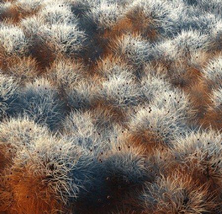 C4D模型真菌毛发细菌病毒图片