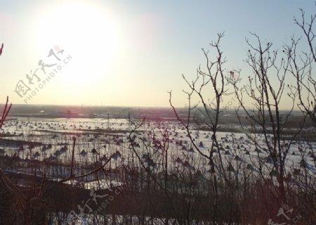阳光下雪白世界图片